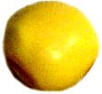 gelb glatt