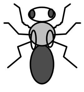 vestigial ebony mutante