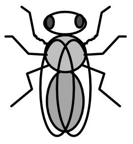 wildform drosophila