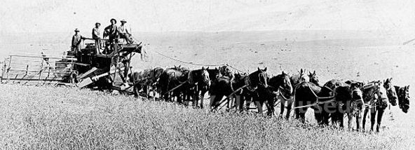 pferde landwirtschaft