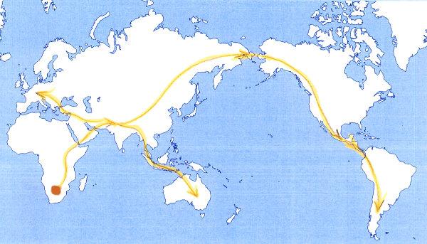 migration von hono sapiens